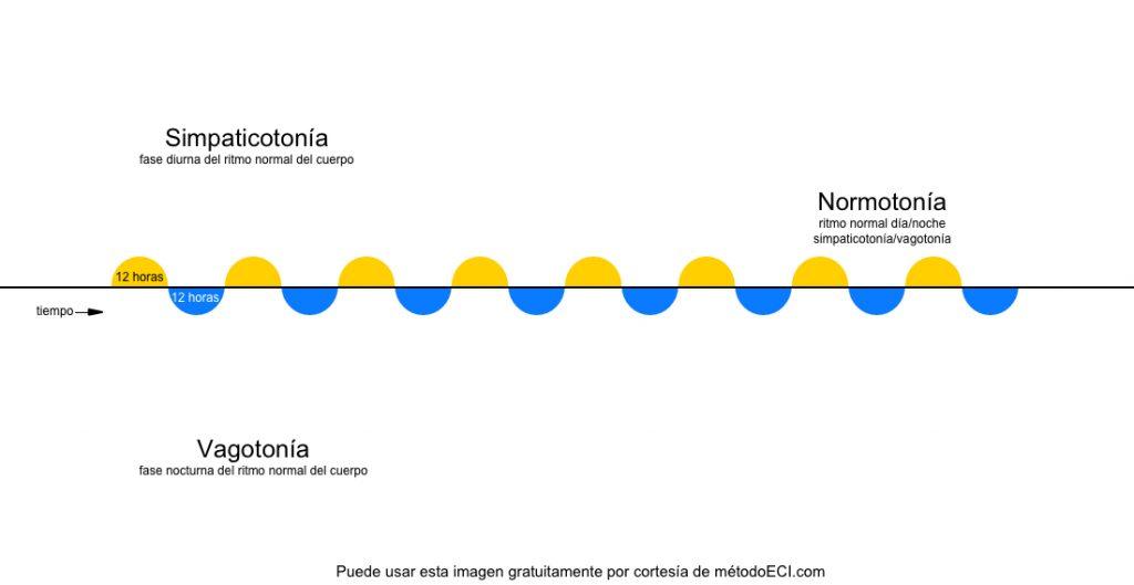 Fases de la enfermedad: normotonía