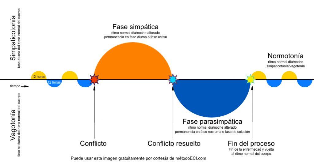 Fases de la enfermedad: fase parasimpática