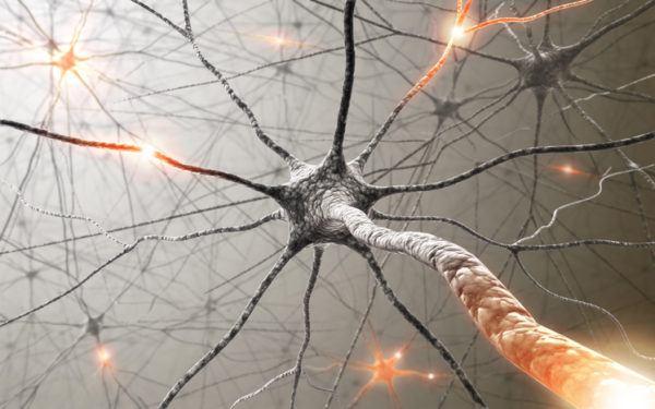 Sistema Nervioso Autónomo: ¿la madre de las enfermedades?